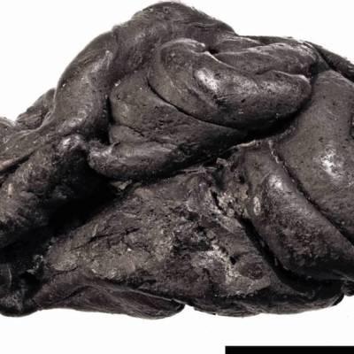 Descifran el ADN de una mujer a partir del 'chicle' que masticó hace 6 mil años