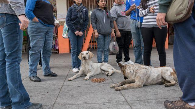 """Foto: """"Perros peregrinos"""" abandonados en la Basílica de Guadalupe. Cuartoscuro/Archivo"""