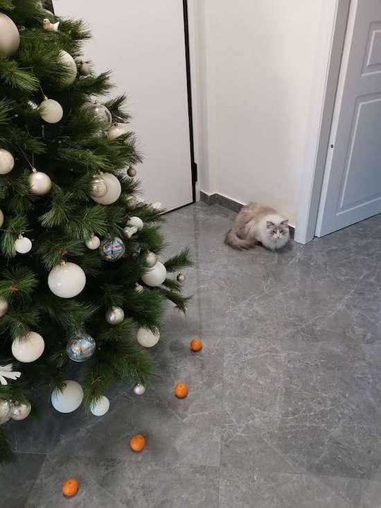 Foto Mujer descubrió cómo mantener a su gato alejado del Árbol de Navidad 20 diciembre 2019