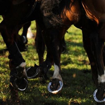 Matan cruelmente a balazos a 15 caballos