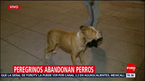Foto: Peregrinos Abandonan Perritos Basílica Guadalupe 12 Diciembre 2019