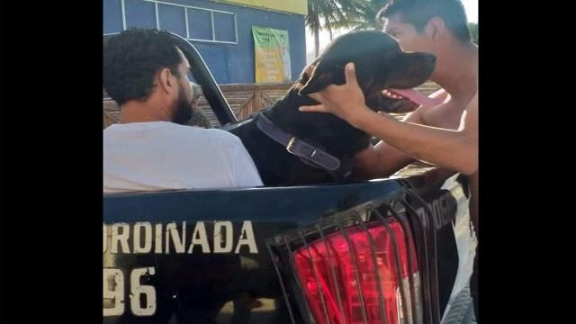 Perro Rottweiler Ataca a Niño