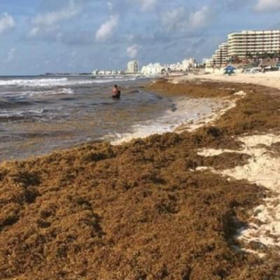 Foto: Recolectan más de 85 mil toneladas de sargazo en Quintana Roo, 5 de diciembre de 2019, (EFE, archivo)
