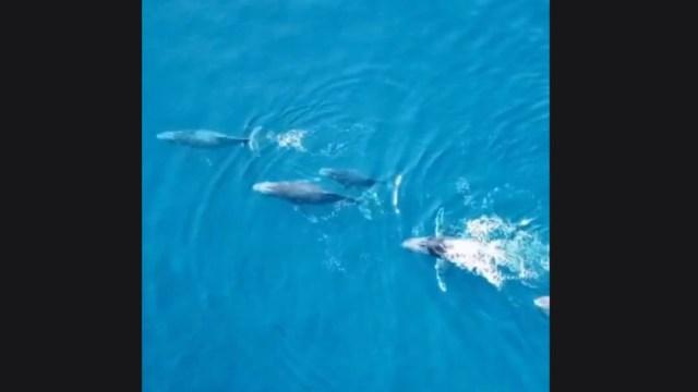 Foto: Video: Avistan ballenas en playas de Guerrero