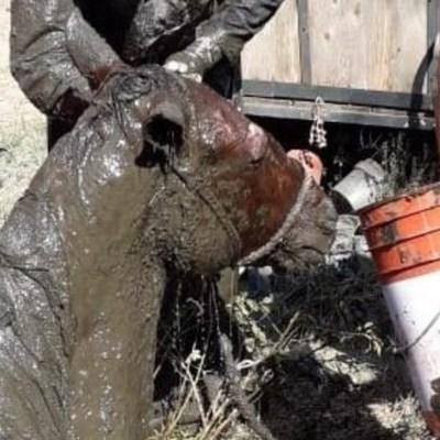 Rescatan a un caballo que cayó a una fosa en Xochimilco