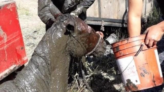 FOTO: Vigilancia Animal rescató a un caballo que cayó a una fosa en Xochimilco, el 28 de diciembre de 2019