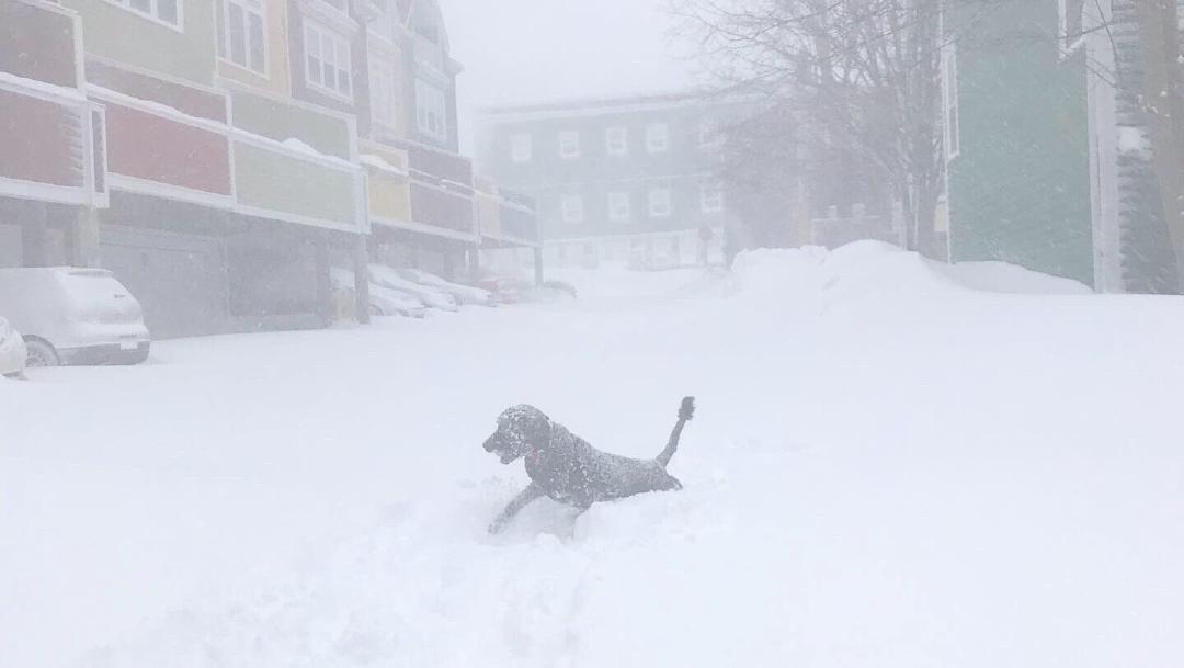 FOTO: Canadá se congela con hasta 70 centímetros de nieve, 17 DE ENERO DE 2020, (Reuters)