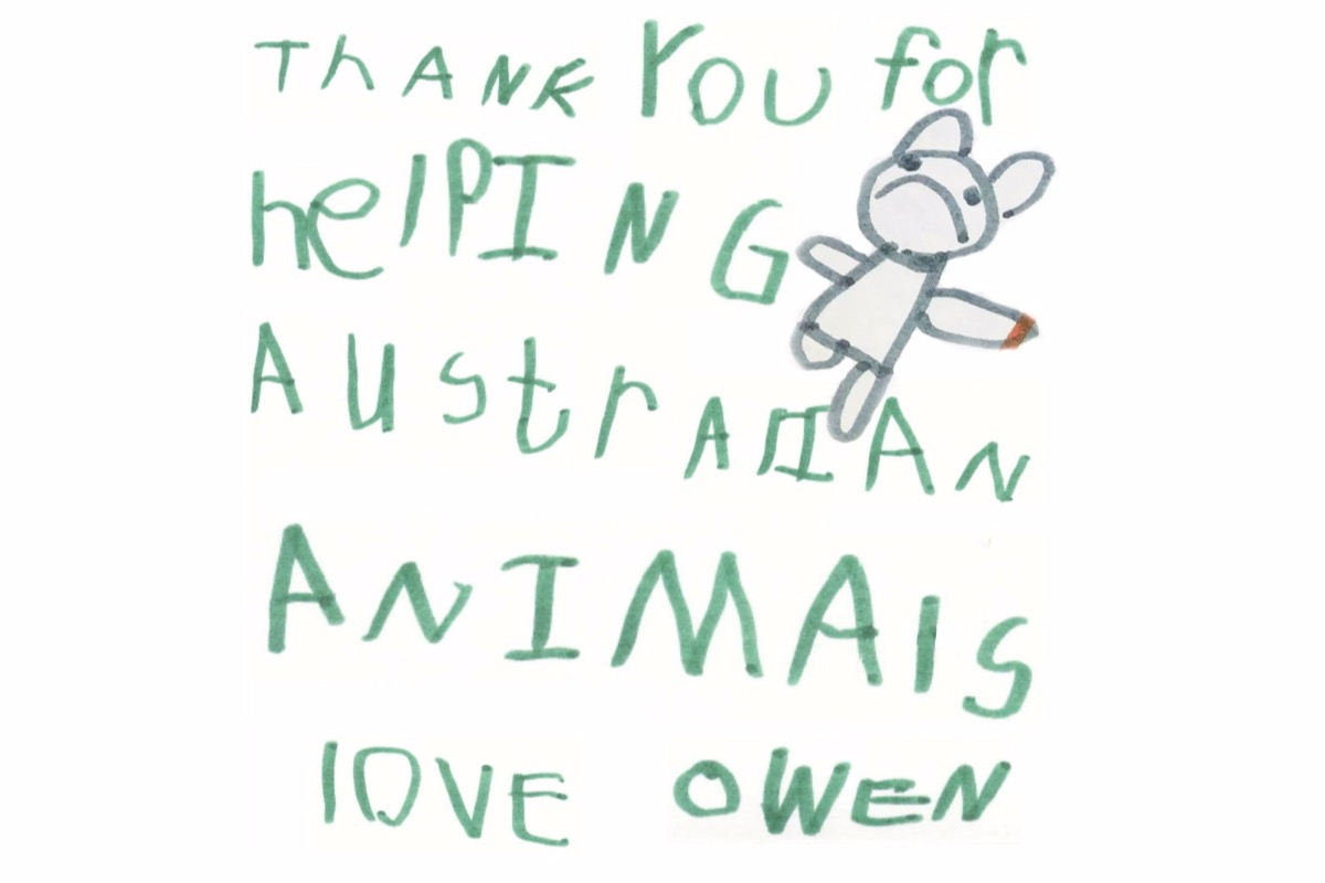 Niño vende koalas de arcilla por los animales de Australia