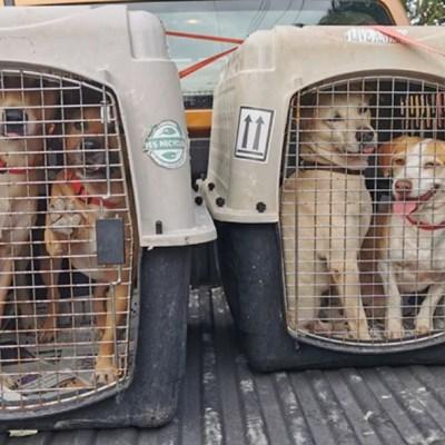 Perritos callejeros se van de México porque encuentran hogar en Canadá
