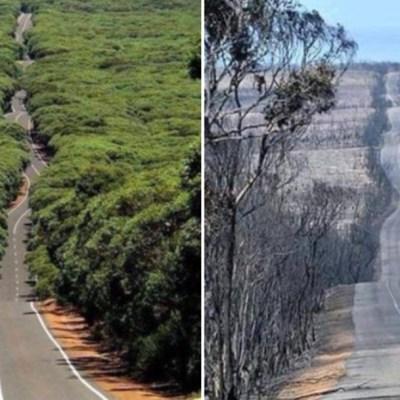 Isla Canguro de Australia fue devastada por los incendios forestales