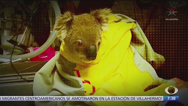 cientos de animales en peligro en australia