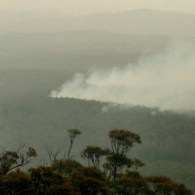 Policía de Australia detiene a 24 personas acusadas de provocar diversos incendios forestales