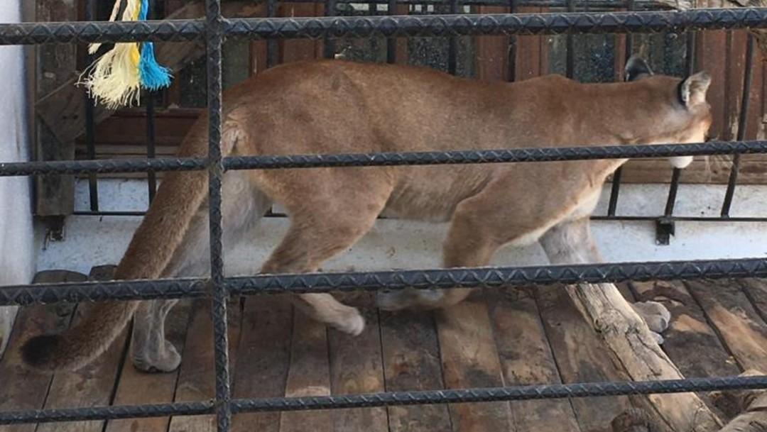 Fiscalía de Oaxaca asegura animales exóticos, armas y autos