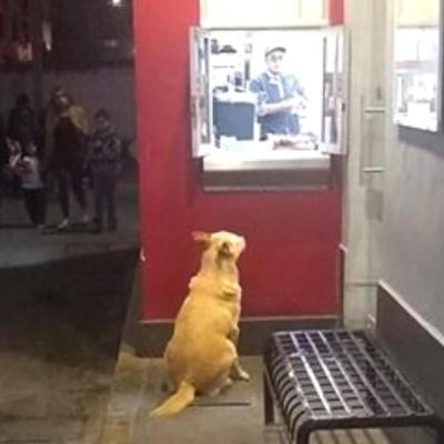 Muere dueño de perrito y empleados de un establecimiento lo alimentan diariamente