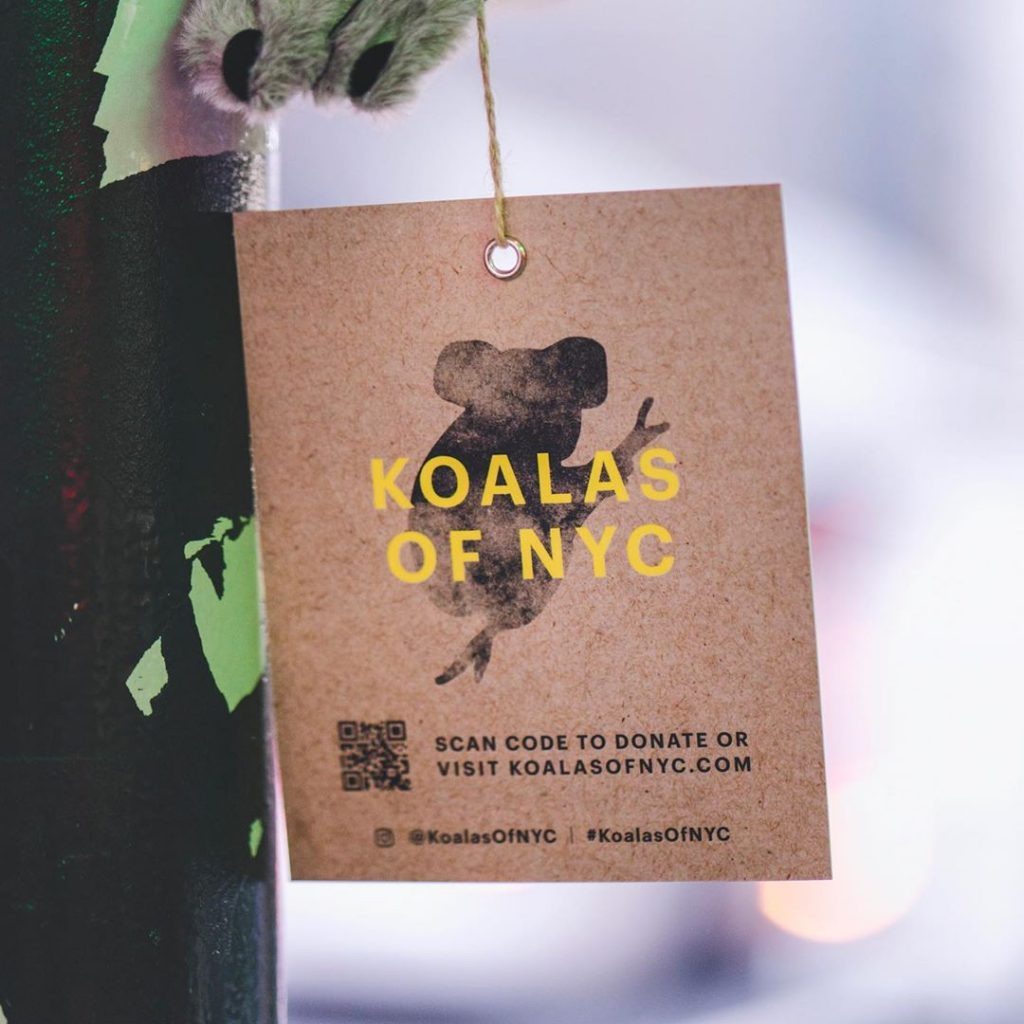 En Nueva York, koalas de peluche buscan ayudar a Australia