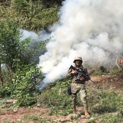 Aseguran y queman plantío de marihuana en Culiacán