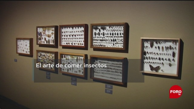 FOTO: 12 enero 2020, mexico es el pais que mas come insectos en el mundo