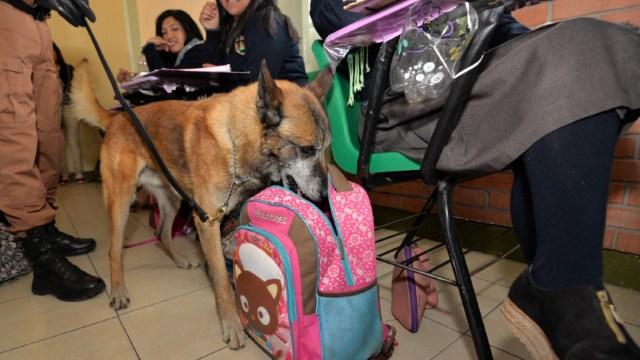 Foto: Autoridades capitalinas llevarán a cabo un operativo de Mochila Segura en escuelas de educación básica, 11 enero 2010