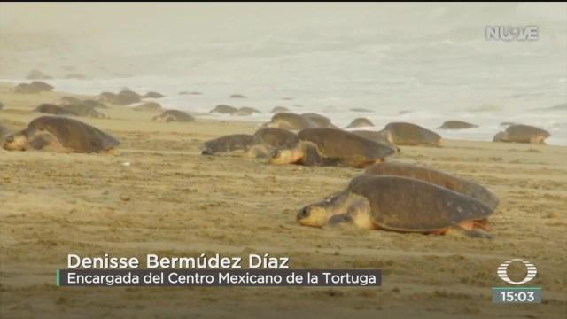 FOTO: mueren mas de 300 tortugas en oaxaca