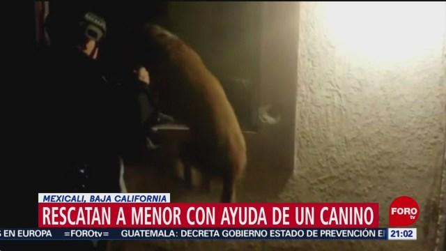 Foto: Video Perro Rescata Niño Maltratado Tío 24 Enero 2020