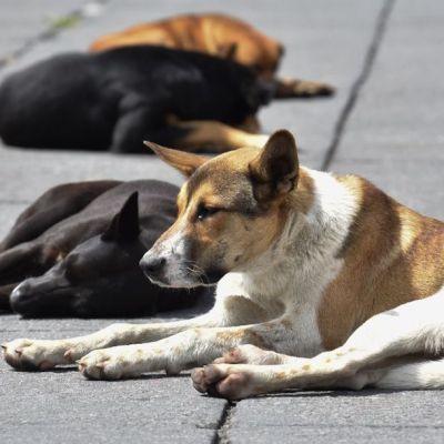 50 perros mueren envenenados en Puebla
