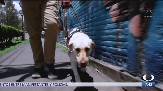 Foto: perros guias para personas con discapacidad visual