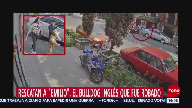 FOTO: rescatan a emilio el bulldog ingles secuestrado en la colonia roma