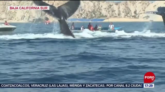 FOTO: turistas disfrutan del avistamiento de ballenas en baja california sur