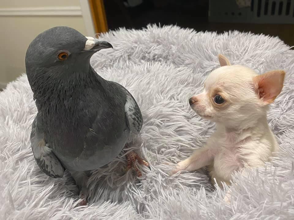 Un perrito y una paloma arrasan las redes con esta historia