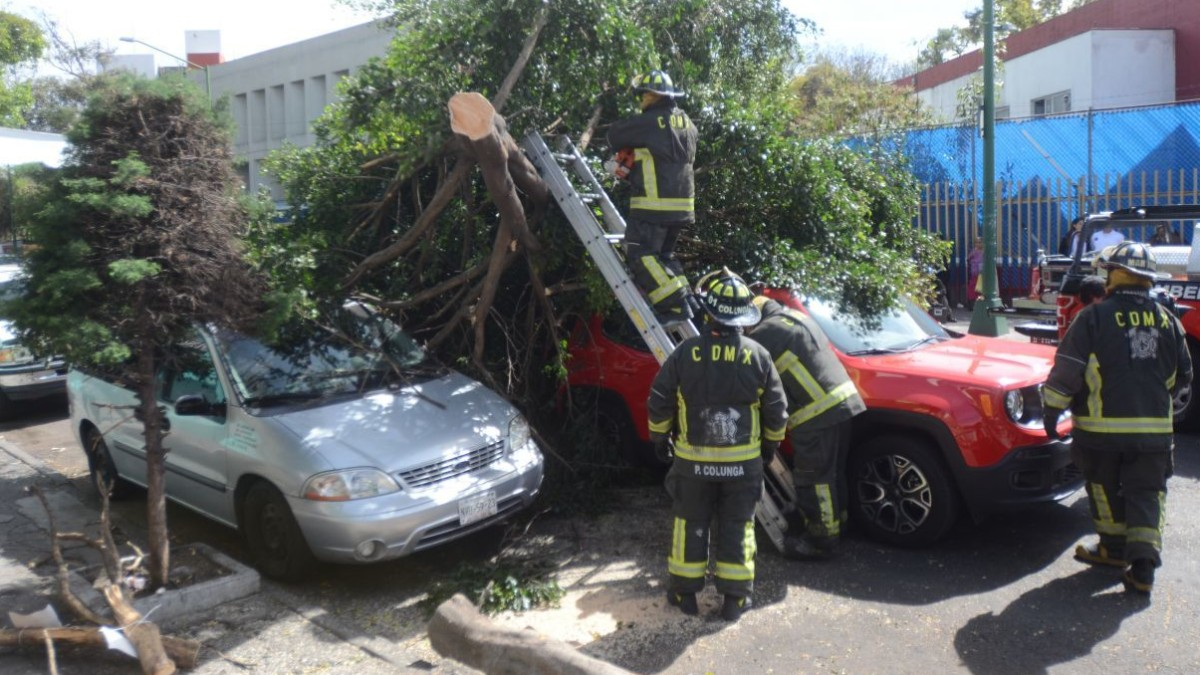 Fuertes vientos en la CDMX derriban 10 árboles