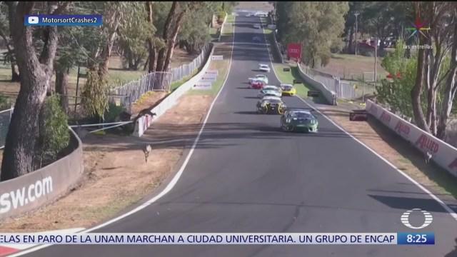 canguros invaden pista de carreras en australia