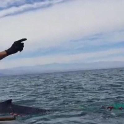 Foto: Rescatan a ballena en costas de Baja California, 15 de febrero de 2020, (FOROtv)