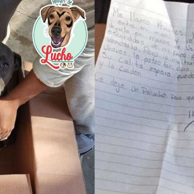 Niño da en adopción a su perrito para evitar que su papá lo maltrate