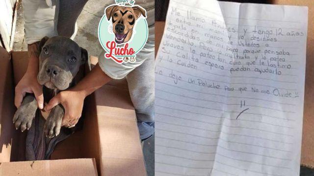 Foto Niño da en adopción a su perrito para evitar que su papá lo maltrate 18 febrero 2020