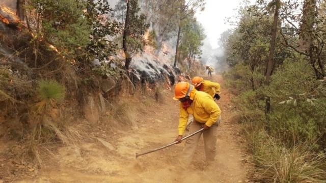 Foto: Controlan al 100 por ciento incendio en Cofre de Perote , 8 de febrero de 2020, (Twitter @el_xalapa)