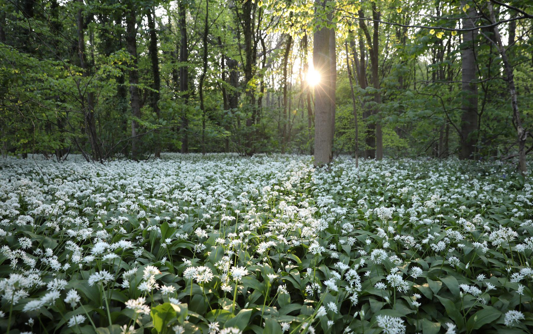 Foto Por qué y para qué existe el Día Mundial de la Naturaleza 3 marzo 2020