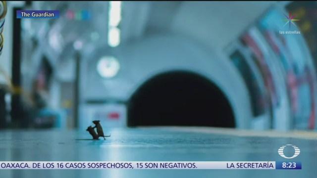 foto de 2 ratones en pelea gana premio de fotografia
