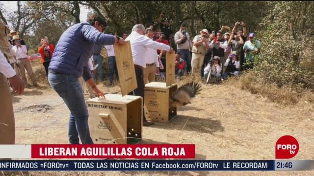 Foto: Agrupaciones Ambientalistas Liberan Aguilillas Cola Roja 13 Febrero 2020