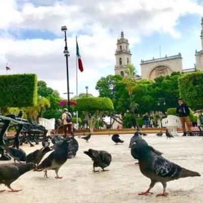 Mérida ingresa a lista de las 'Ciudades Arboladas del Mundo'