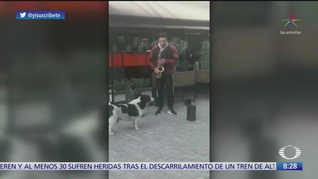 perrito le hace coros a saxofonista