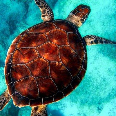 Imagen de tortuga muerta atrapada por un hilo de pesca gana premio de fotografía