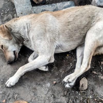 Proponen hasta 4 años cárcel por abandono de mascotas