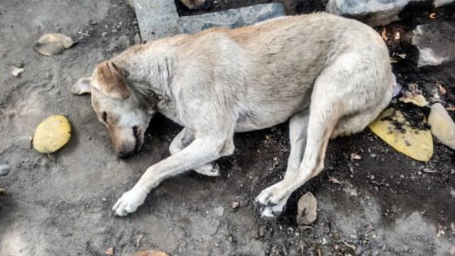 Proponen cárcel por abandono de mascotas
