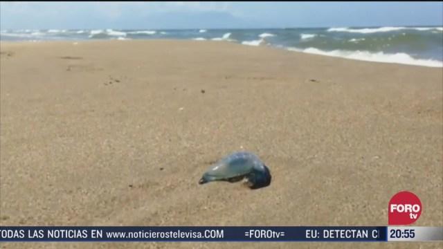 Foto: Avistamiento Medusas Playa Coatzacoalcos Veracruz 18 Marzo 2020