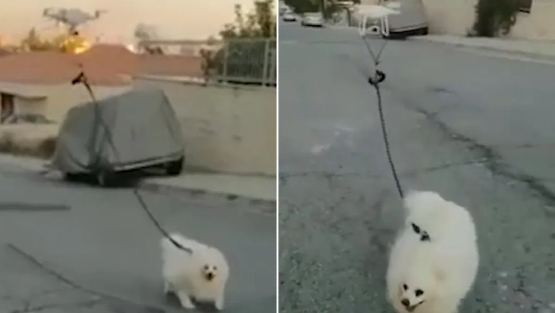 Un hombre uso su drone para pasear a su perro — Cuarentena