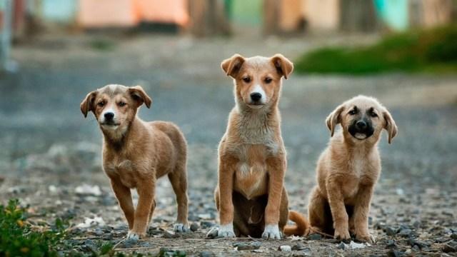 Policías alimentan a perros callejeros durante contingencia