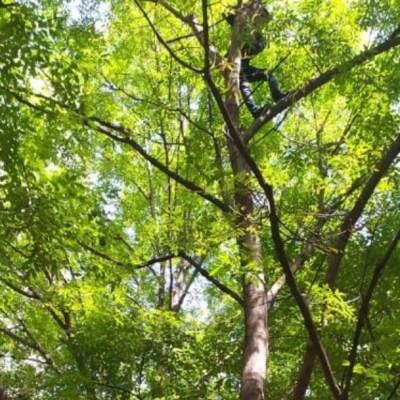 Rescatan a hombre que subió a un árbol en Polanco, CDMX