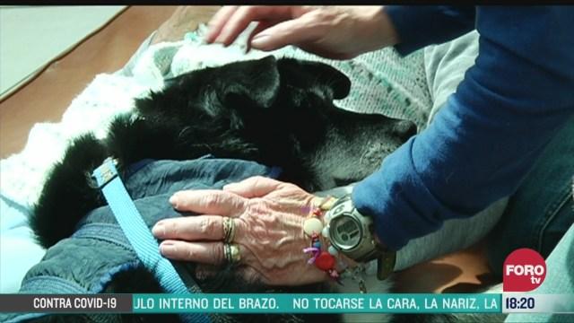 FOTO: mascotas brindan beneficios para adultos mayores
