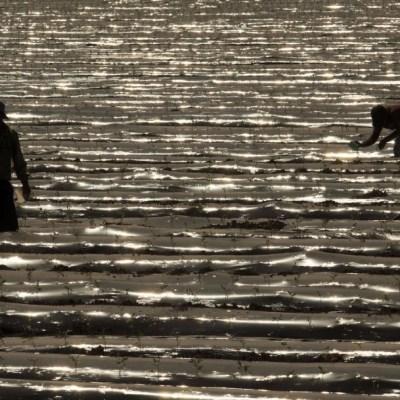 Foto: Un par de jornaleros en los campos agrícolas de EEUU, 28 marzo 2020
