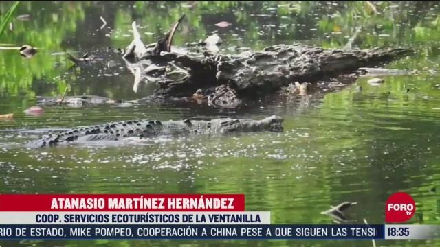 FOTO: cocodrilos se pasean por laguna ante ausencia de personas por coronavirus